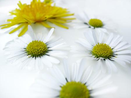 flores-invitacions[1]